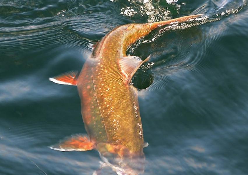 Vättern är en frisk sjö men blir fiskfattigare!